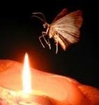 mothandflame.jpg